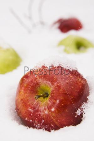 Фотография на тему Яблоки в белом снегу