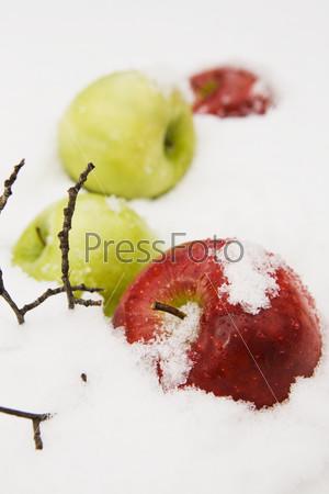 Яблоки под белым снегом