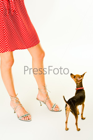 Image of a small dog standing near its owner's legs
