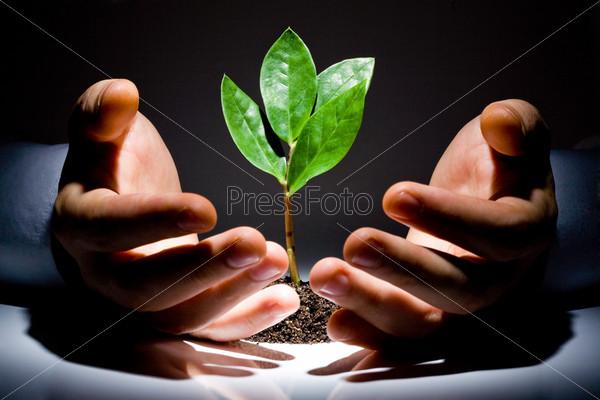 Зеленое растение между мужских рук на черном фоне