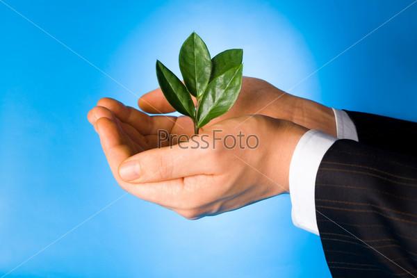 Бизнесмен, держащий зеленое растение в руках на голубом фоне