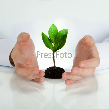 Image of green plant between business man's hands placed on a white table