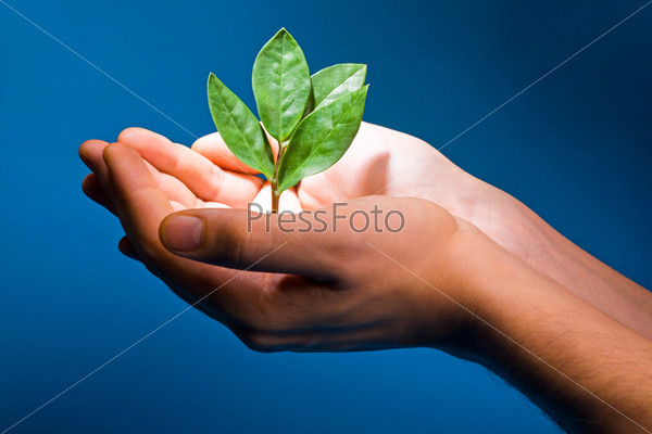 Photo of hands of the man with a young green plant