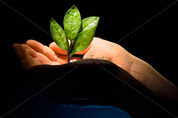 Image of a new green plant in the male hands