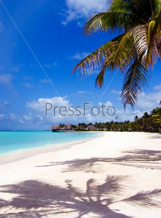 Восхитительный вид морского песчаного побережья с пальмами