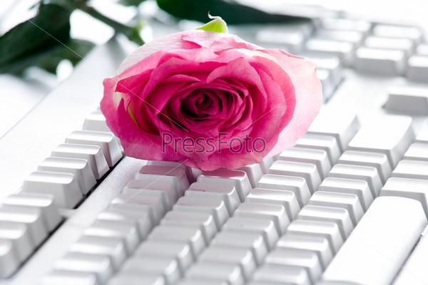 Розовая роза на компьютерной клавиатуре