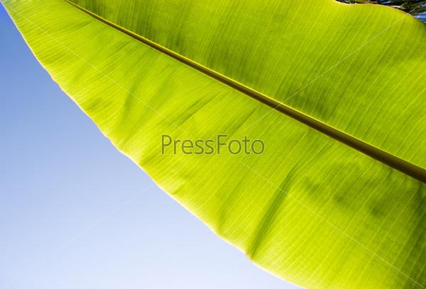 Огромный зеленый лист на фоне неба