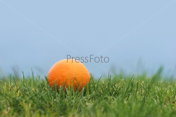 Fruit in grass