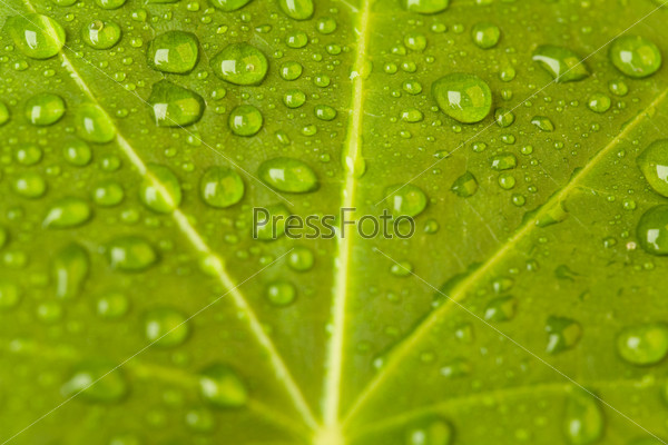Зеленый лист с каплями росы
