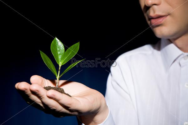 Мужчина держит на ладони зеленый росток