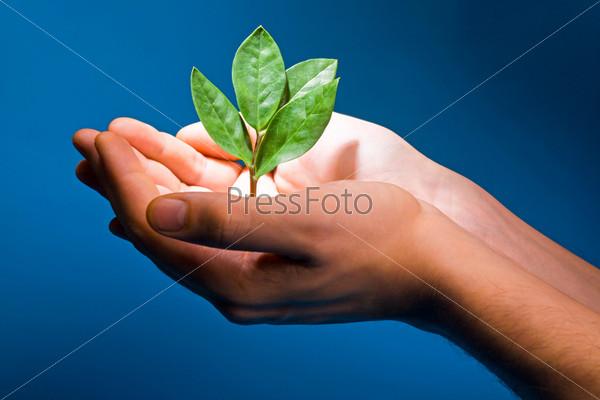 Зеленый побег растения в ладонях на голубом фоне