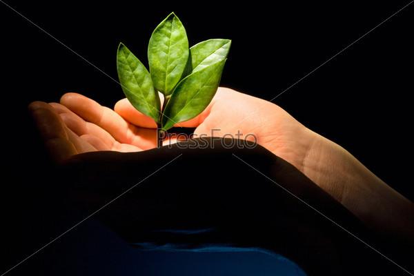 Зеленый росток в раскрытых ладонях на черном фоне