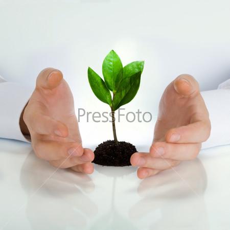 Фотография на тему Руки окружающие зеленый росток