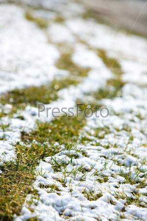Трава, покрытая первым снегом