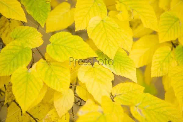 Крупный план яркой желтой листвы