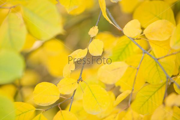 Фотография на тему Крупный план ветки дерева с яркими желтыми листьями