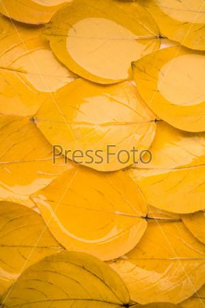 Мокрые осенние листья лежащие на земле
