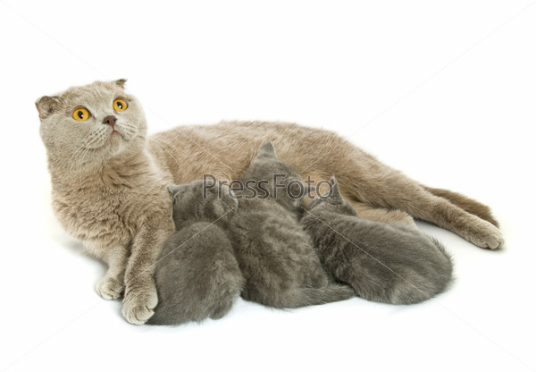 Small kittens and mother-cat
