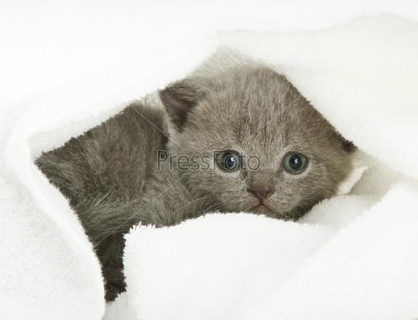 Kitten over white