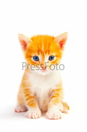 Kitten health advice
