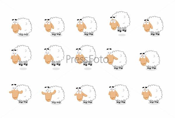 Группа белых овец