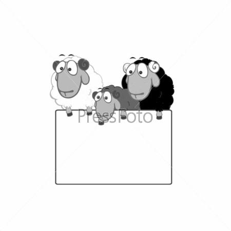Овцы с табличкой для текста