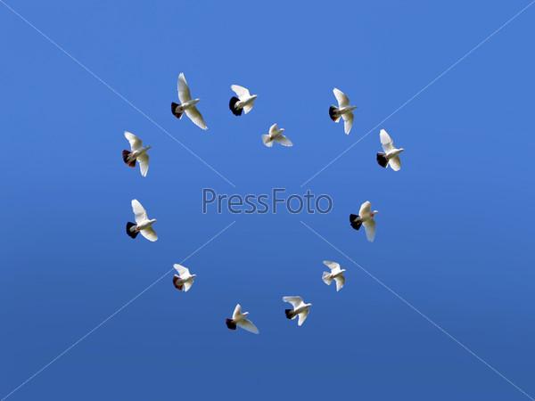 Получить к чему снится стая птиц над головой скидки супермаркетов