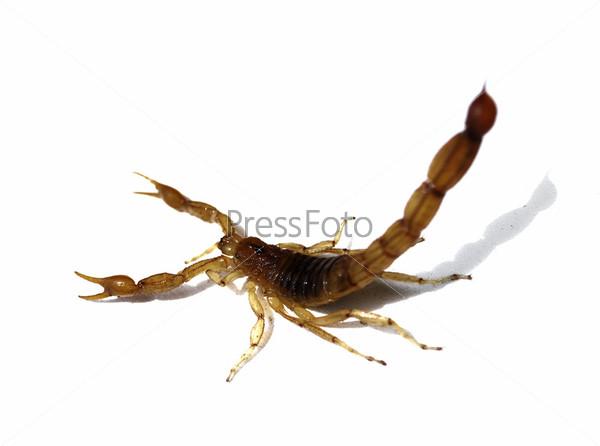 приходит, сдаю к чему сняться скорпионы нашла