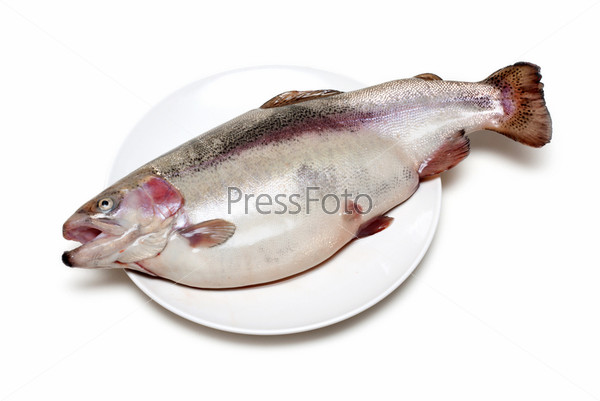 Fish trout on plate