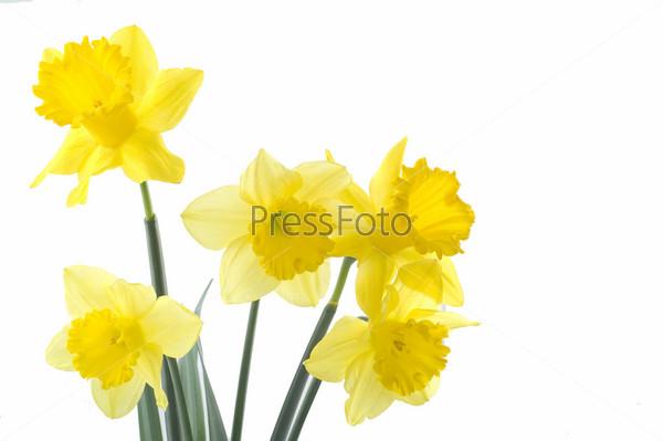 Желтые цветочки на белом фоне