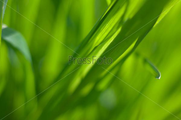 Зеленая трава крупным планом