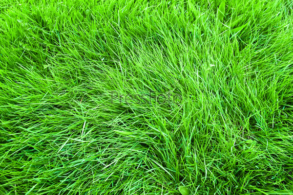 Background in the form of a young green grass