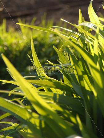Зеленая трава в лучах солнца
