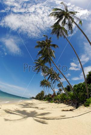 Пальмы, пляж, море