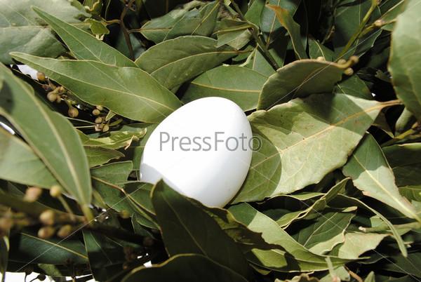 Яйцо и лавровые листья