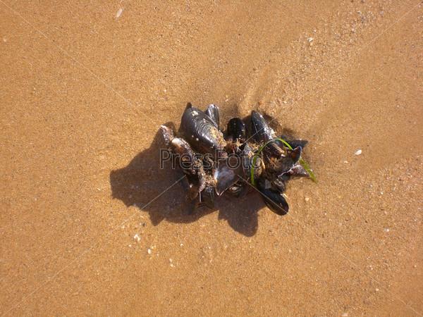 Ракушка на песчаном пляже