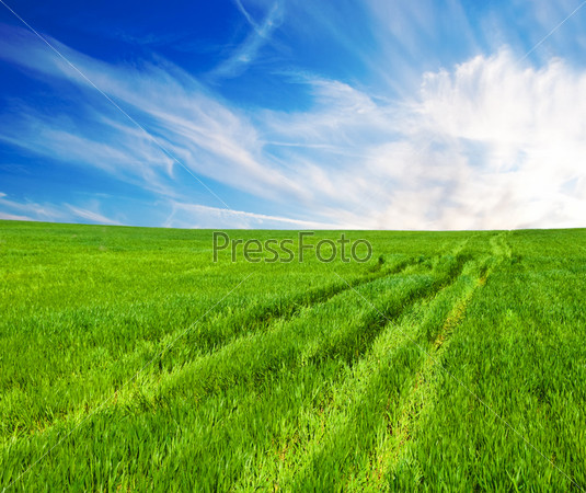 Meadow with a green grass and the blue sky with clouds