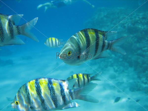 Морские рыбки