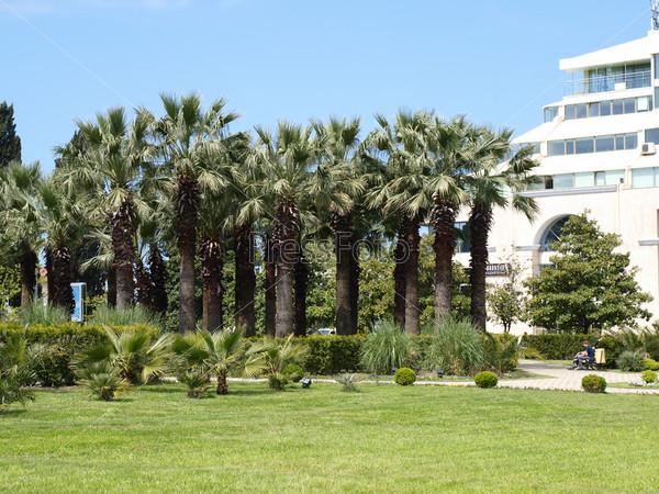 Парк с пальмами