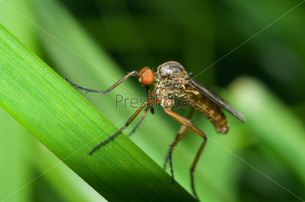 Макроснимок неопределенного комара (отряд Dipterae) на растении