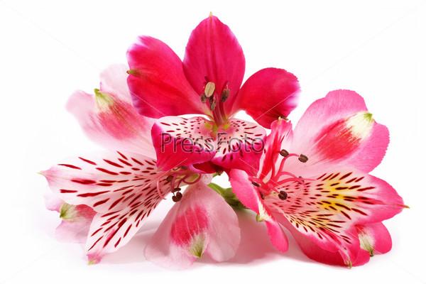 картинка на белом фоне цветок