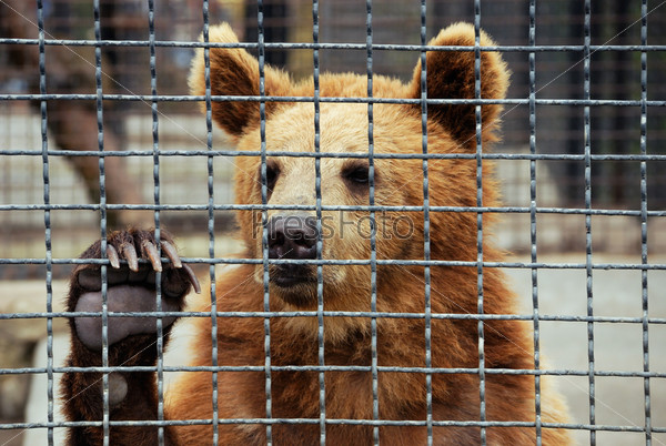 essay animals in zoos Argumentative essay: should zoos be activist decided to fight against any kind of cruelty to animals demand for the ban on zoos is also an endeavor to end.