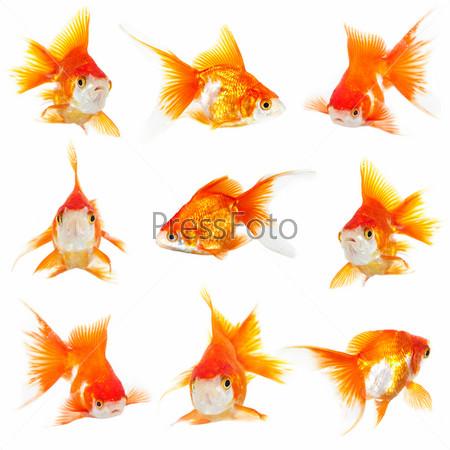 Pressfoto for Immagini da colorare di pesci