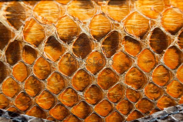 Визитница из кожи водной змеи от 2680 руб: лучшая цена и