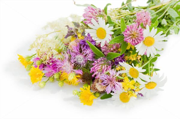 Цветы картинки красивые на белом фоне