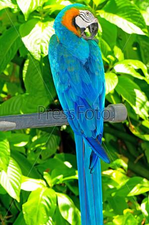 Фотография попугай