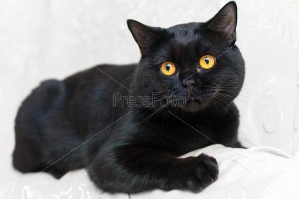 Кошки фото на белом фоне