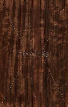 seamless eucalyptus texture