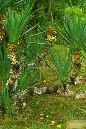 Тропический парк