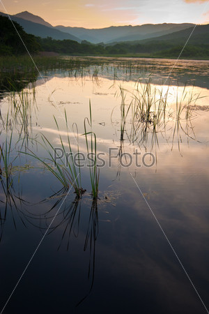 lake with the grass at sunset